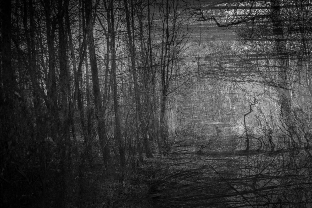 Monochrome photo art forest echo